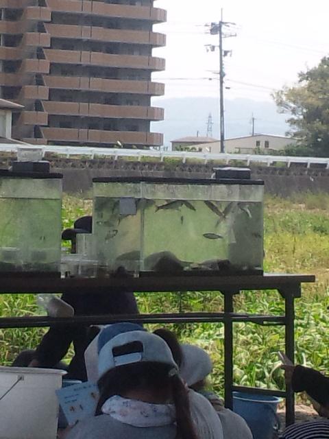 夏休み親子の水生生物観察会