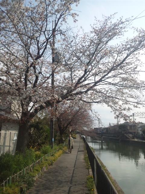京都3区の伏見区にて