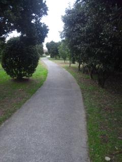 公園を歩く