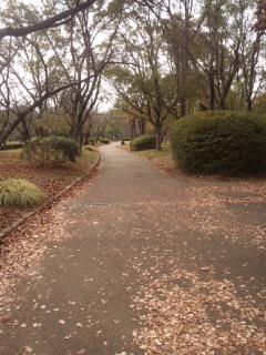 本日の公園を歩く