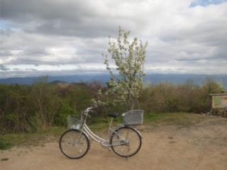 「ママチャリ」で、泉州最高峰の和泉葛城山の山頂まで行きました! 858m<br />  ムチャしんどい 国の天然記念物ブナ林の伐採の現場確認完了