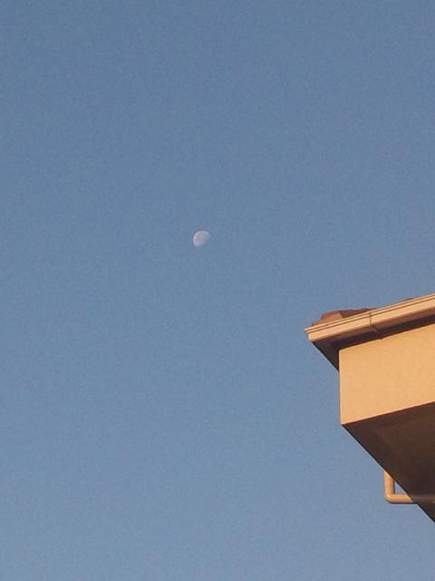 梅雨入りしてかなり経ちますが、今朝も白い月がきれいに映える青空 朝立は休み、定期検診
