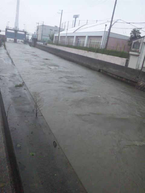 大阪府南部の河川をみてますが