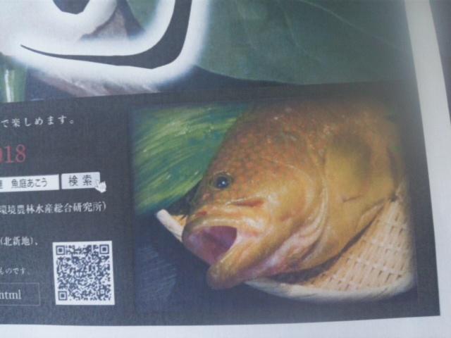 大阪湾の幻の高級魚「あこう(<br />  キジハタ)<br />  」7.2〜7.1<br />  5体験フェア